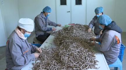 金昌市聚力打造菜草畜高品质现代特色农业示范区