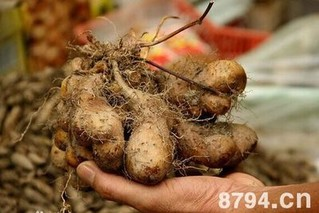 甘薯的功效与作用