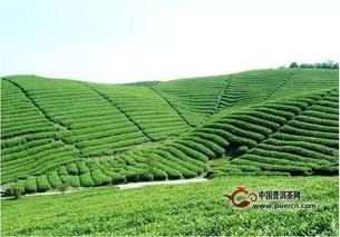 高山茶与平地茶的甄别