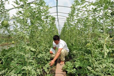 黑龙江:育秧大棚二次利用种果蔬