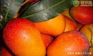 现在芒果价格多少钱一斤?芒果降价了是何原因?