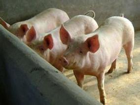 抗氧化剂在猪饲料中的应用