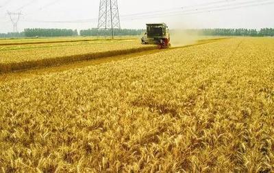 今年夏粮国家继续实行*低收购价政策
