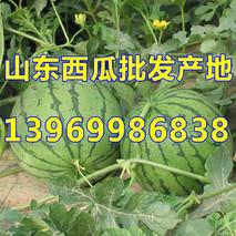 山东南赵村西瓜交易市场人气火爆