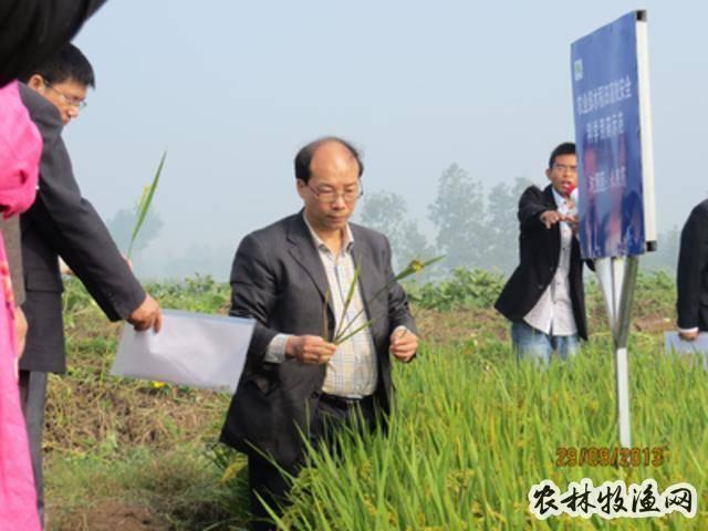 农药科学高效的施用技术