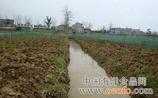 稻田黄鳝生态养殖技术