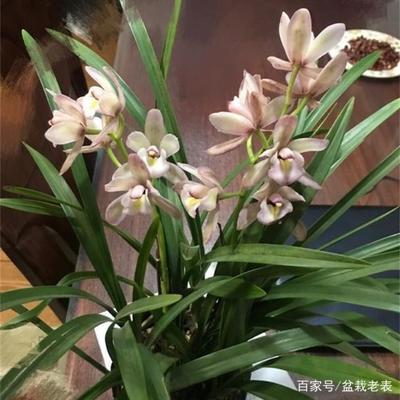 http://www.nlmy.com.cn/yuanlin/uyxtzz.html