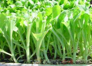 温室栽培系统———穴盘育苗