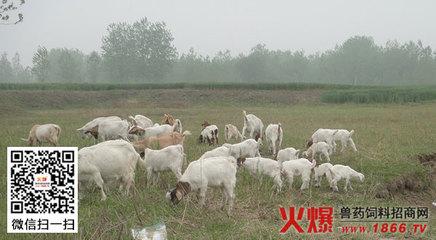羊常见寄生虫病的防治