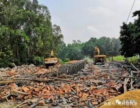 痛心!化州良光镇丁香冲村里百亩稻田被养猪场污染