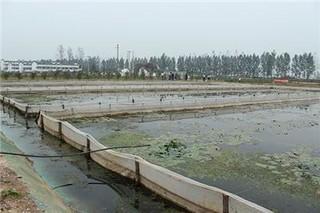 国内最大规模水蛭养殖基地落户江苏连云港徐圩新区