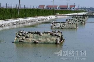 今年上半年局地甲鱼饲料锐减 特种鱼粉市场也很无奈
