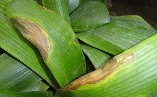 如何高效防治园林植物根茎部病害