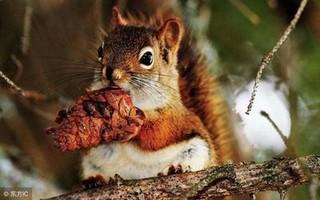 松鼠也可以大规模养殖 它的价值不简单!
