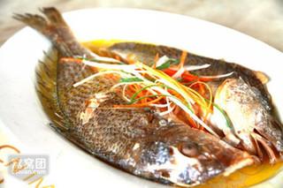 无锡市成功繁育淡水大黄鱼