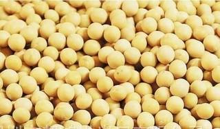 阿根廷大豆现货价格涨跌互现