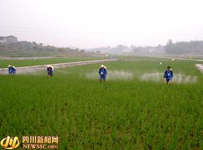 喷雾器平时勤保养 防病虫应急更方便