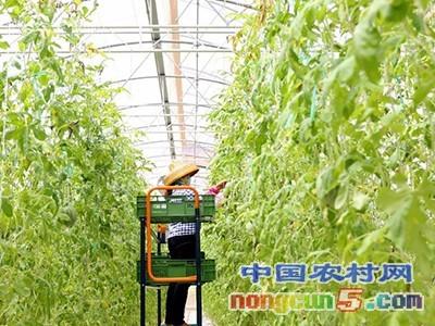 山东开展农业产业强镇示范建设