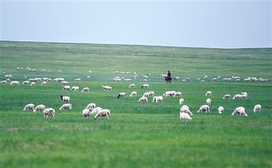 草原牧业牧民实现三方共赢