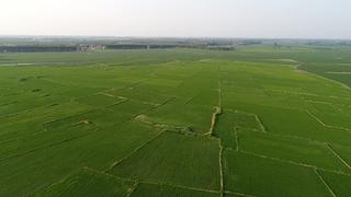 省肥省工增产吉林省推广水稻机插秧同步侧深施肥技术
