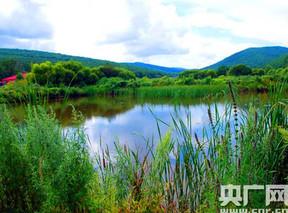黑龙江七台河:树上榛子喜丰收 树下药材效益高
