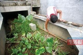 湖南小伙刚勇养殖药用蜈蚣走出一条致富新路子
