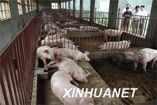 桐乡市数字赋能促进生猪增产提质