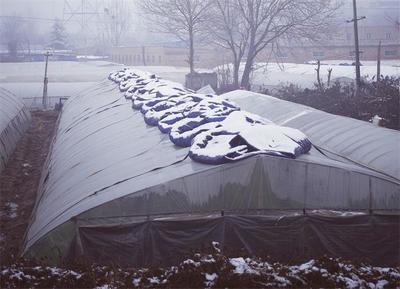 """大棚蔬菜""""过冬"""":盖棉被 增室温 巧用药"""