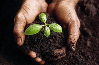 生物有机肥需与化肥相结合