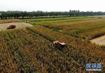 安徽省已收获秋粮超5000万亩