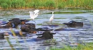 宜昌黄柏河流域水治理显成效