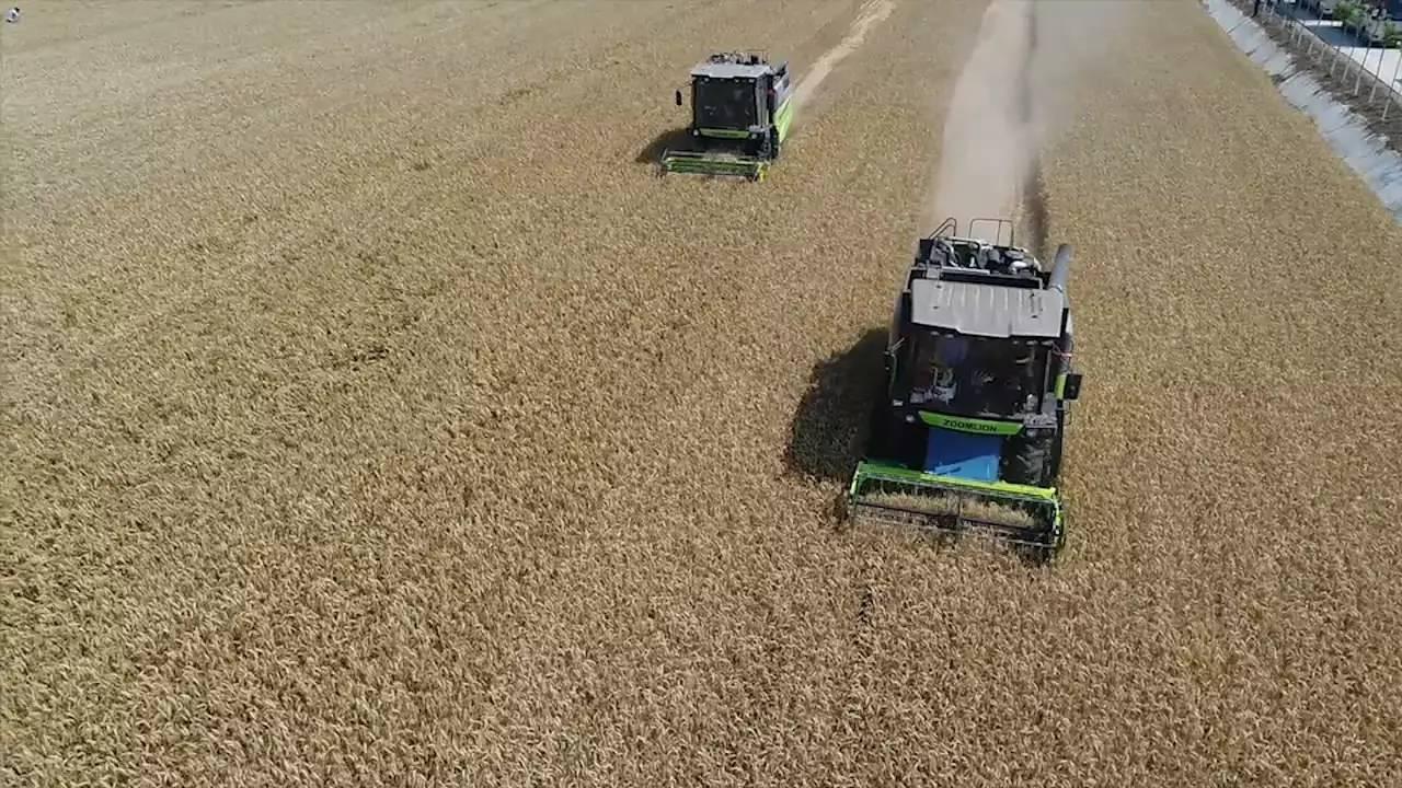 加快构建竞争力导向的农业政策体系