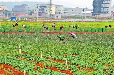提高蔬菜种植户 科学种植水平