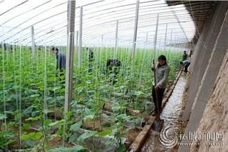 棚菜微水灌溉技术