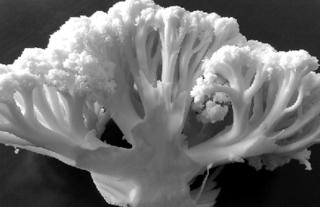 花椰菜生物有机肥用量调配