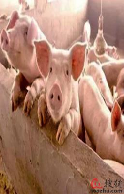 广东发放首笔生猪活体抵押贷款