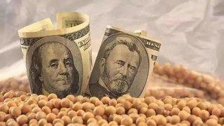 美国大豆对华销售总量同比增长1.69倍