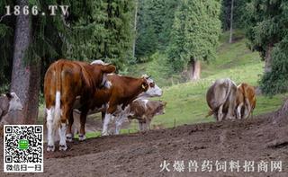 如何给病牛灌水剂药物