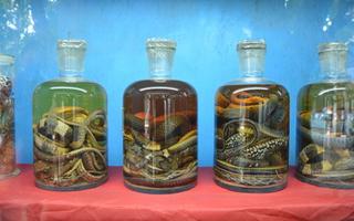关于蛇酒的制作方法要点