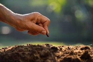 有机肥、无机肥、生物菌肥怎样合理搭配?