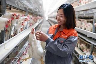 四川返乡创业明星罗杰生态养殖尼泊尔香猪闯市场