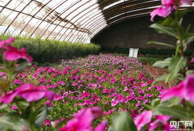 南疆加快设施极速5分排列3蔬菜产业发展