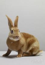 兔:大蒜治兔皮炎