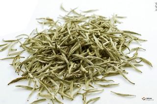 福鼎白茶的采制工艺