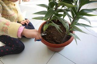 百合花怎么养?百合花盆栽的养殖方法