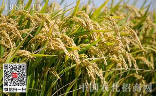 水稻对哪些农药敏感