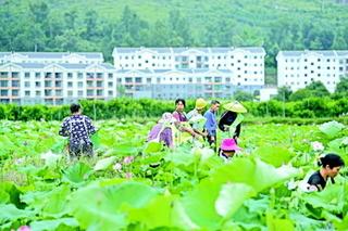 把产业革命向纵深推进|贵州刺梨:工业化主导下的农业产业