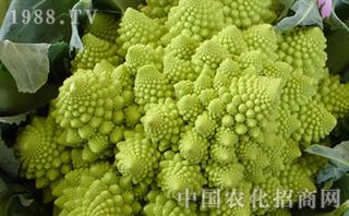 花椰菜的施肥方法?