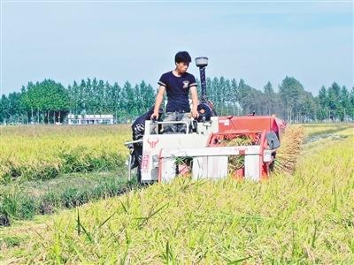 科学家实现水稻种子无性繁殖 杂交水稻性状不怕丢失