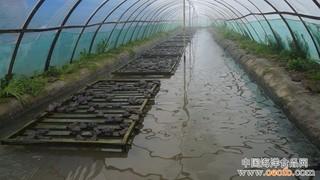 福建漳州诏安县开展牛蛙养殖整治